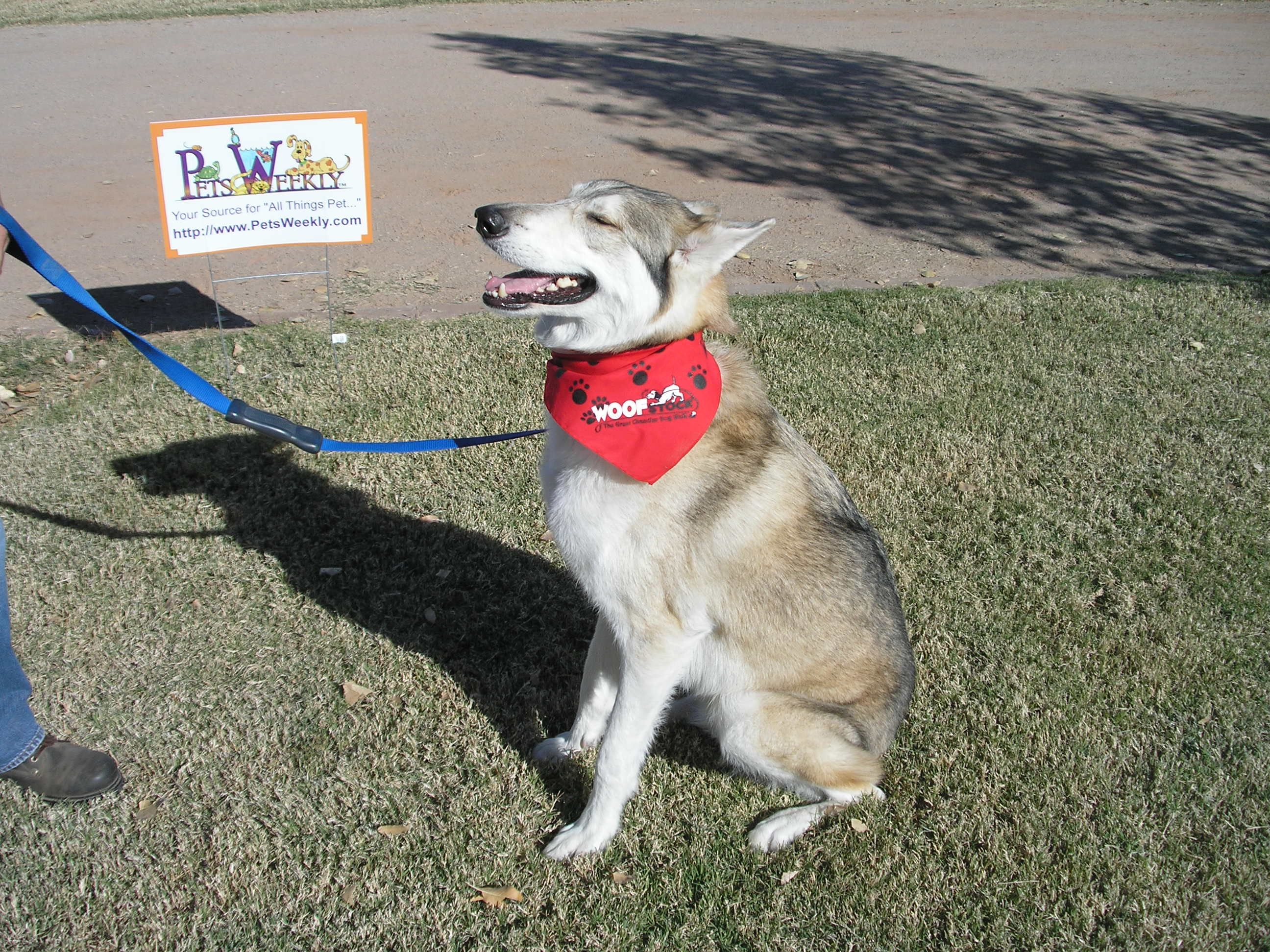 Join us at Woofstock in Chandler, AZ Dog stories, Dogs