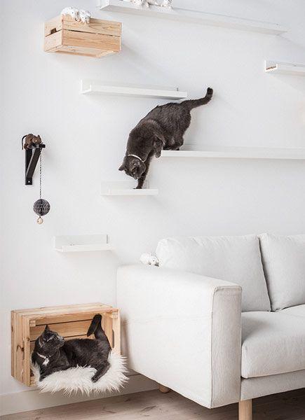 wereld kattendag diy kattenklimmuur cat paradise pinterest mur de chat chats et la panth re. Black Bedroom Furniture Sets. Home Design Ideas