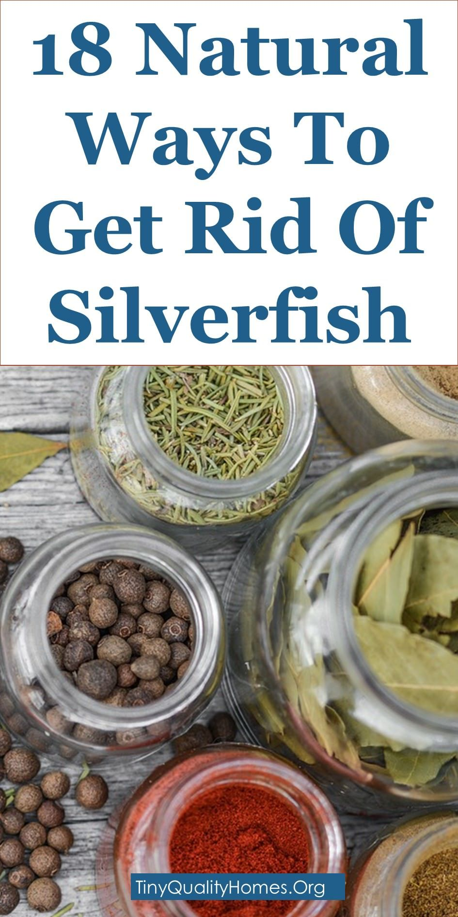 18 Natural Ways To Get Rid Of Silverfish Silverfish