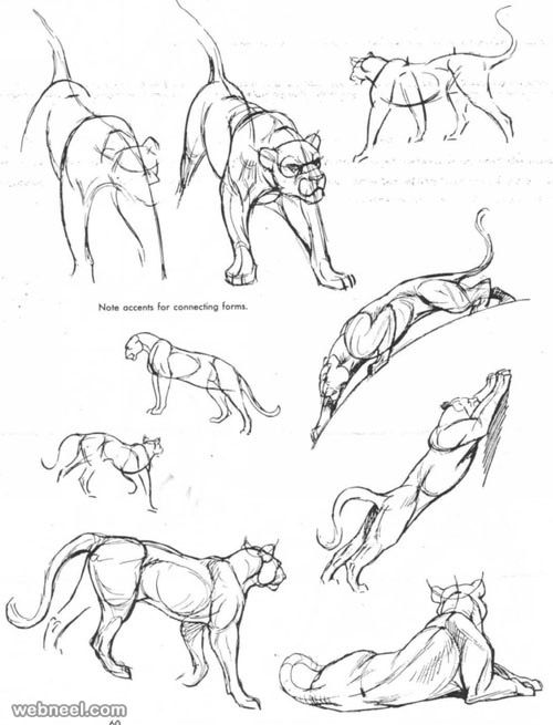 25 Beautiful Animal Drawings for your inspiration - How to Draw ...