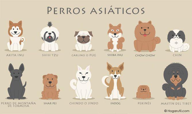 Los Perros Asiaticos Perros Dogs Pets Perros Razas De Perros