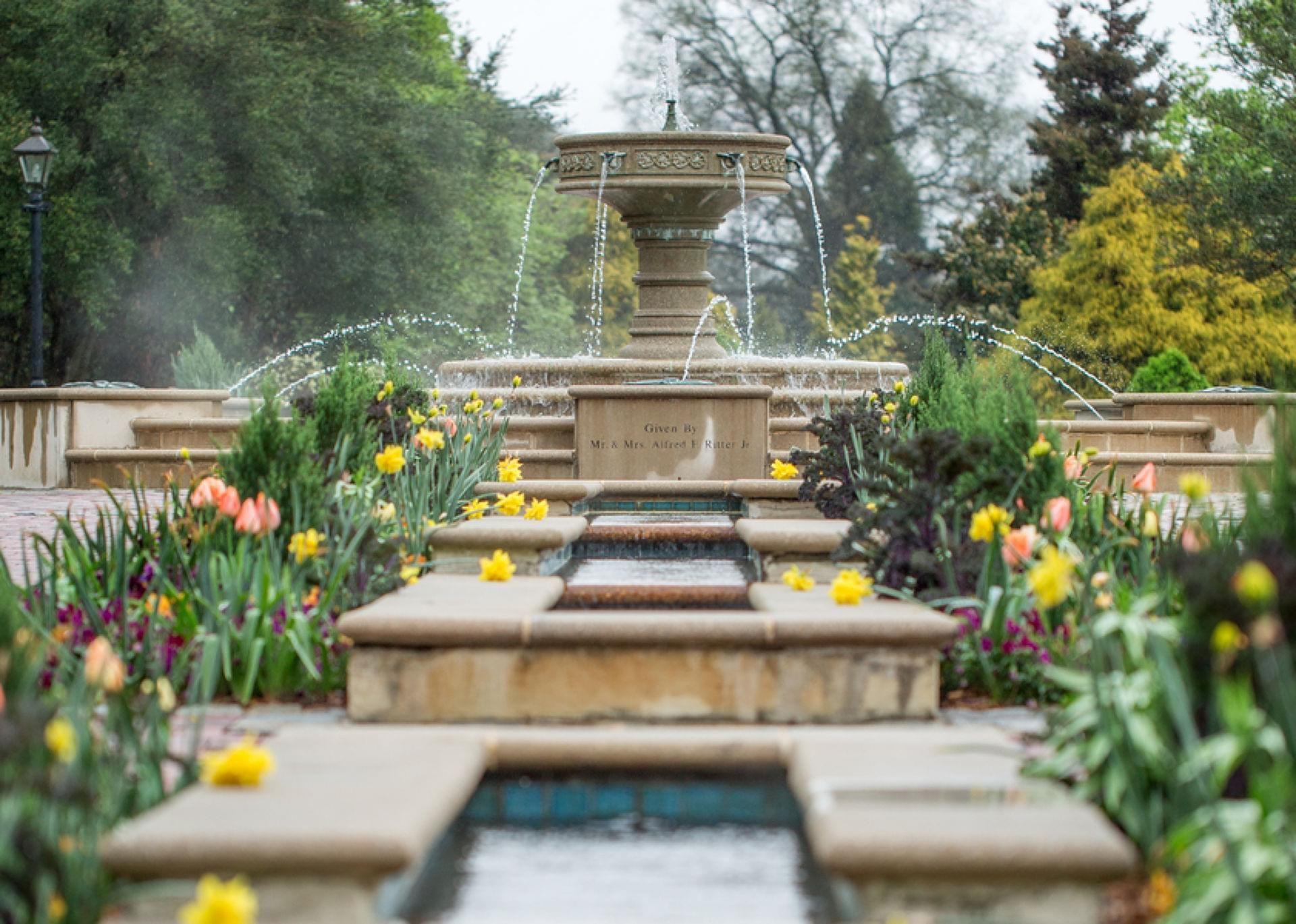 Blue-Hued Garden Beauty in Norfolk | Hampton Roads, VA | • Cherry ...