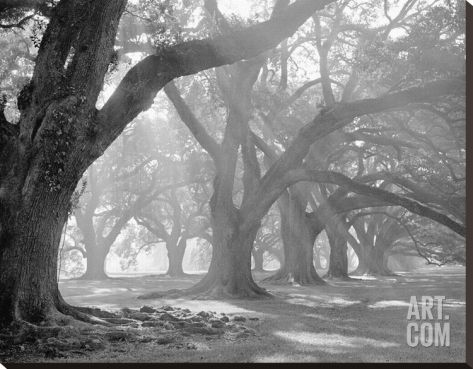 West Corridor Morning Light Stretched Canvas Print by William Guion at Art.com