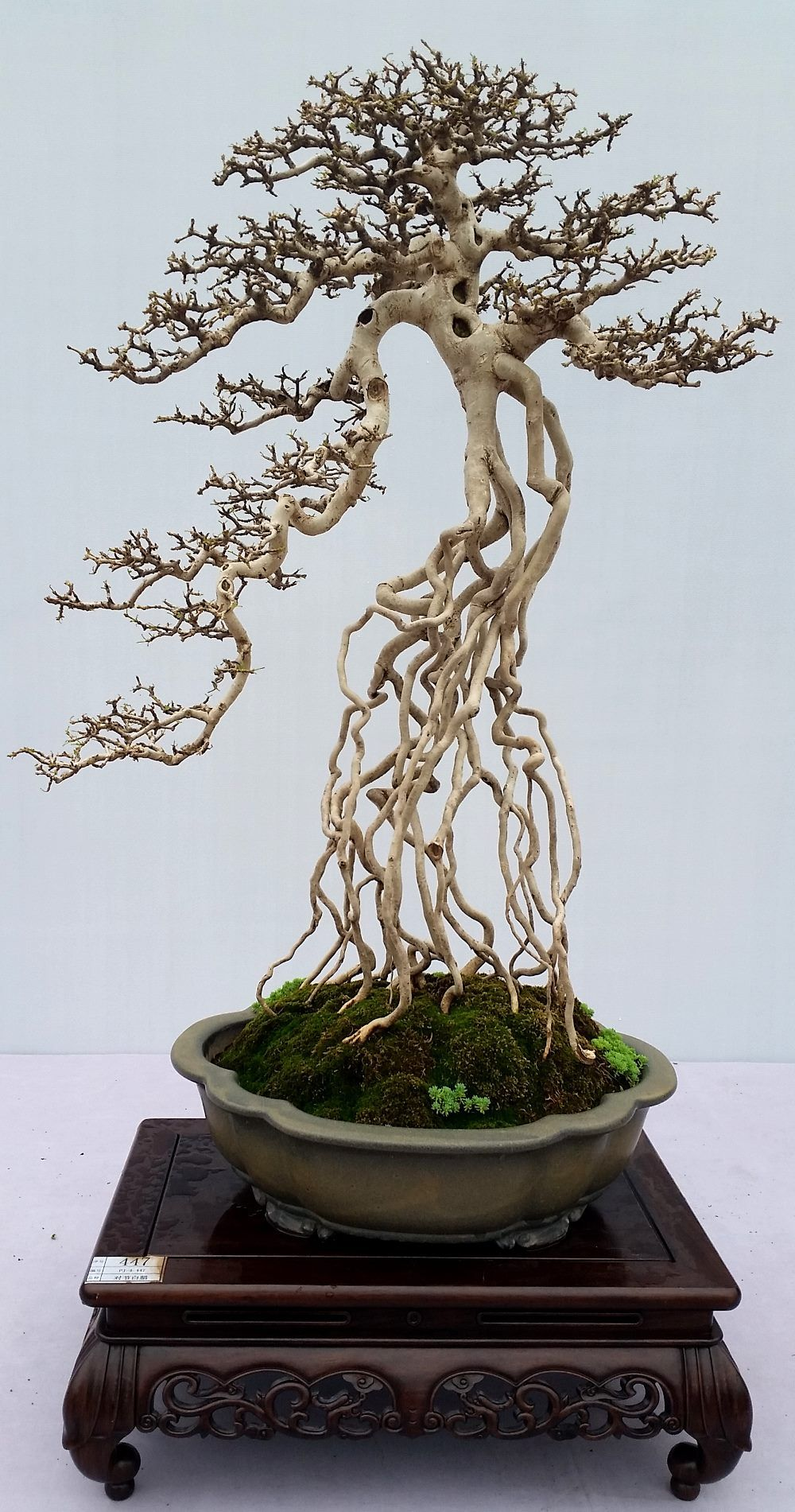 Highlights of the 9th National Bonsai Exhibition & the 1st
