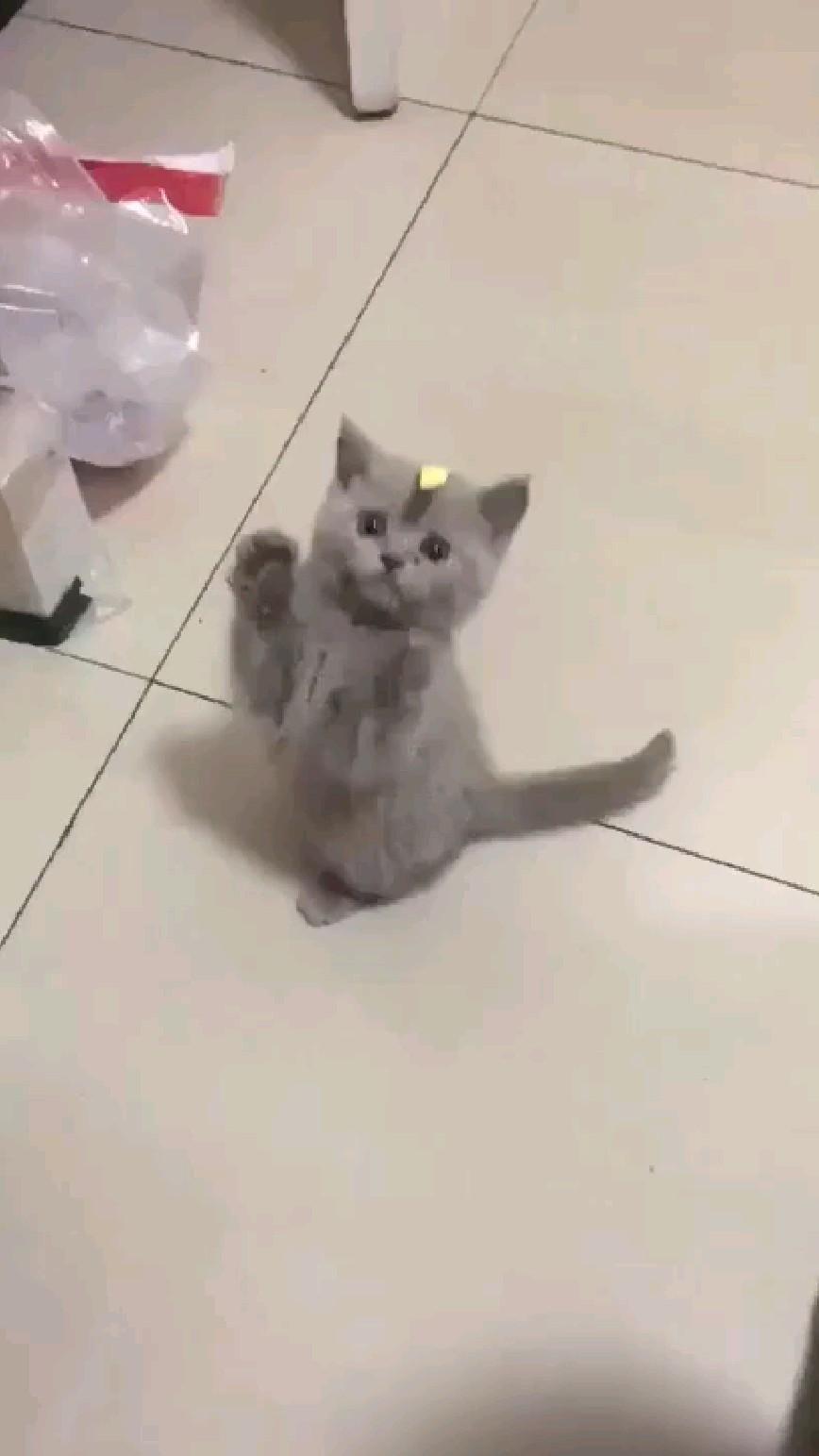 Cute Kitty 🐈😘