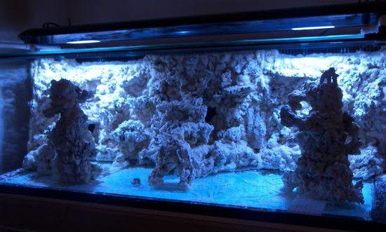 Image result for saltwater aquarium aquascaping ideas Aquarium