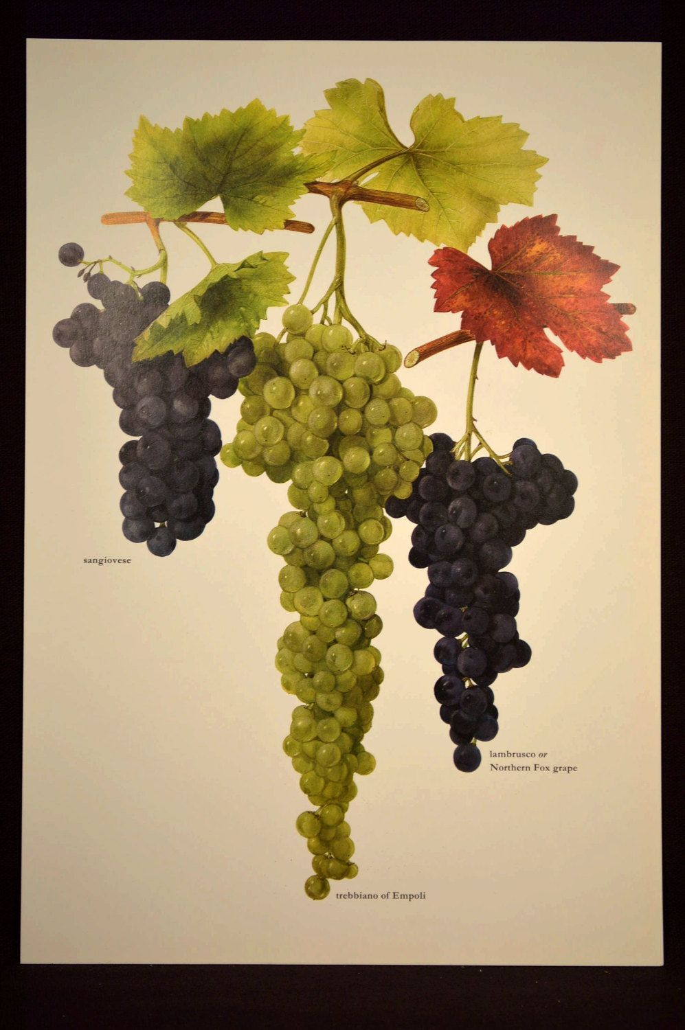 Colorful Grapes Wall Decor Component - Wall Art Collections ...