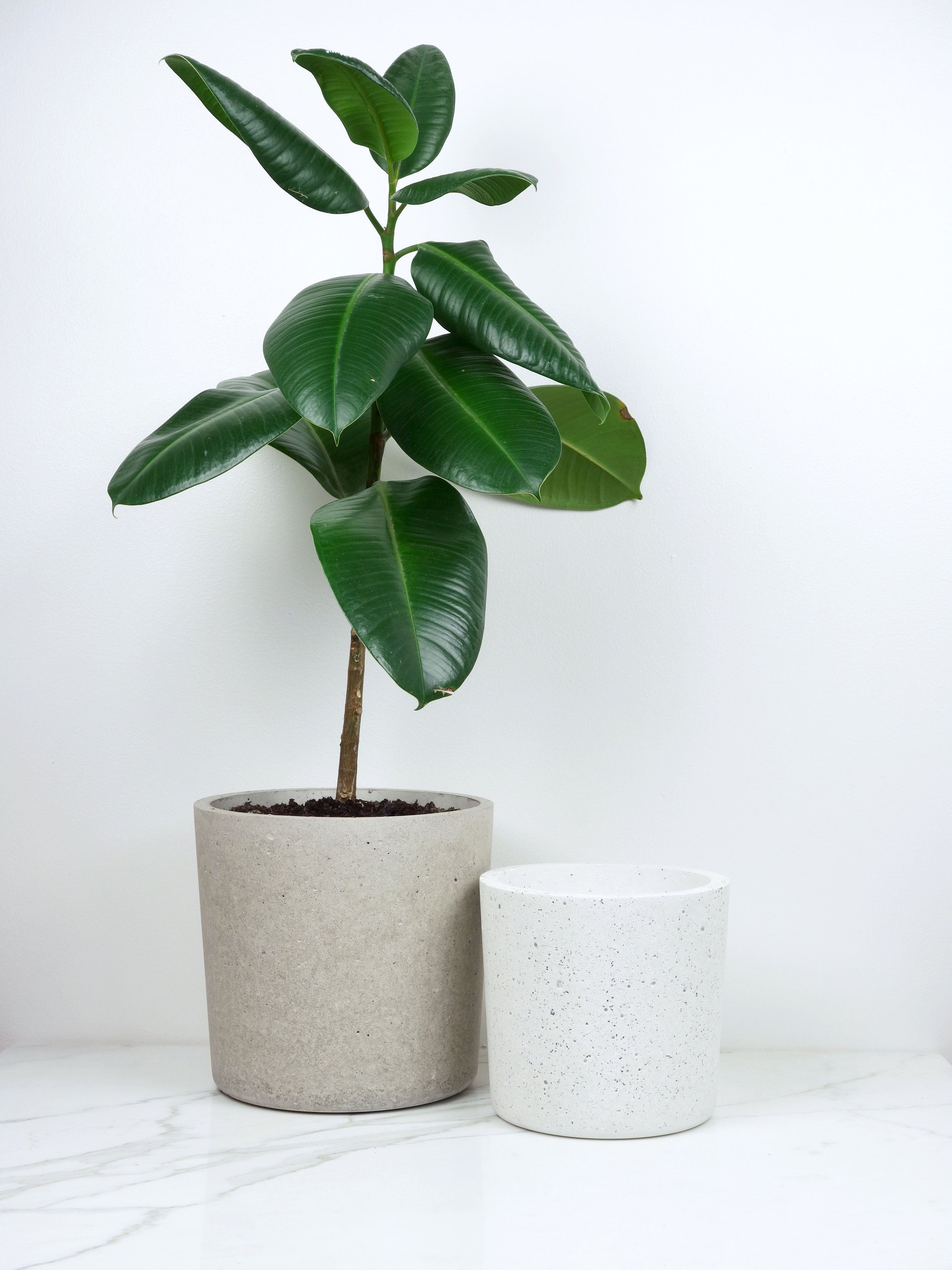 plant diy and wooden cement stand planter pot pinterest