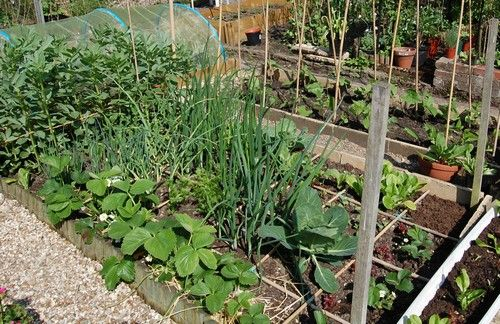 1000  images about raised beds on Pinterest   Gardens  Raised beds and Vegetable garden. 1000  images about raised beds on Pinterest   Gardens  Raised beds
