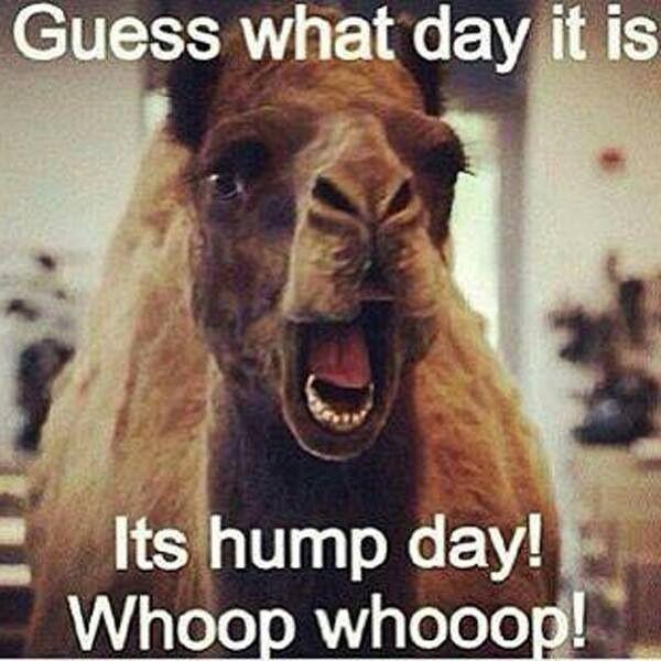 Funny Hump Day Quotes: Funny, Funny Quotes, Funny Ads