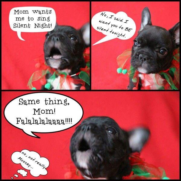 French Bulldog Puppy sings 'Fa la la la la, la la la la' for Christmas...sort of.❤