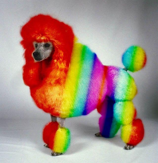 Rainbow Dog Subby Your Dog Wants His Dignity Back Rainbow