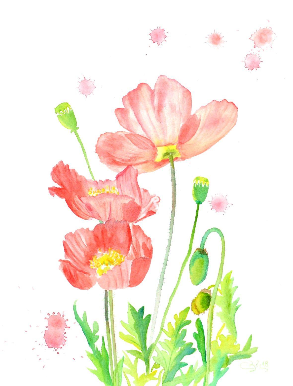 Demo Aquarelle Fleurs De Pavot Flower Wallpaper Watercolor