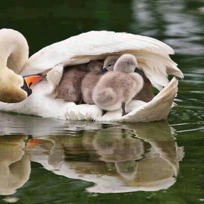 Mothers....their love rules!