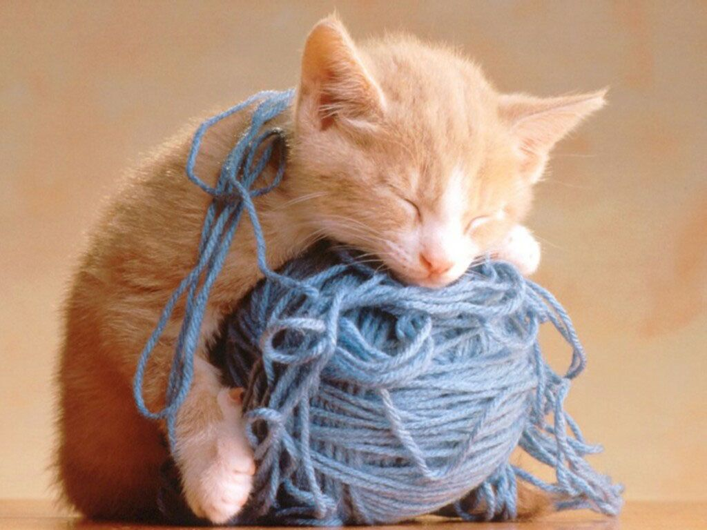 worn out cat from playing with yarn.