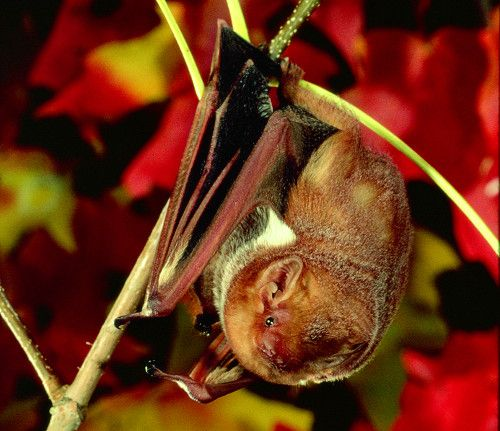 Batweek Starts October 24th With Images Bat Fascinating