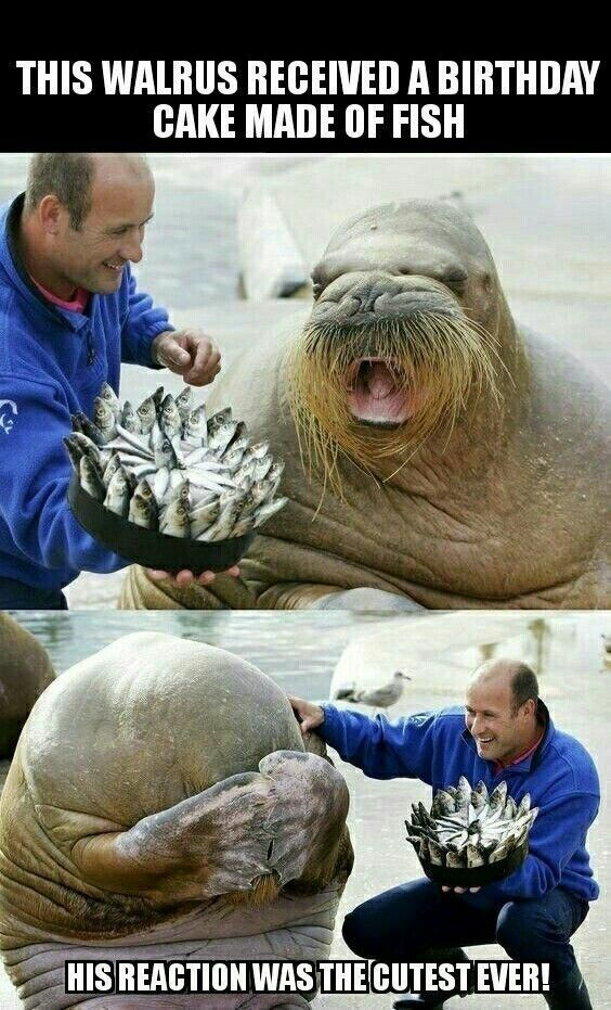 Best Funny Animals 18 Animal Memes That Are 100% Funny 18 Animal Memes That Are 100% Funny 5