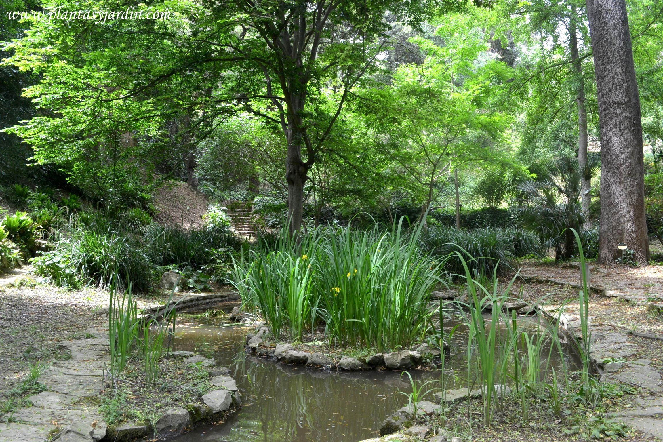 Estanque con iris en el antic jard bot nic de barcelona for Plantas para oxigenar estanques
