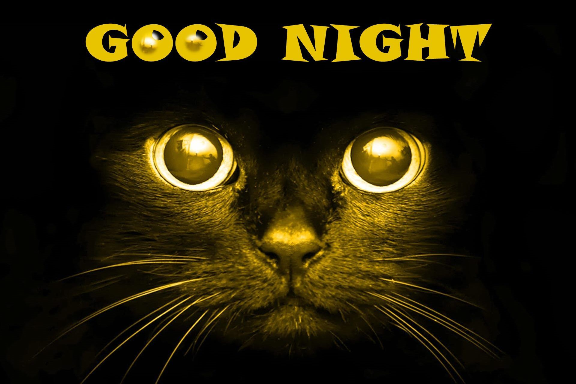 Black Cat Good Night Good Night Scary Cat Black Background Hd Wallpaper 05875 Background Hd Wallpaper Scary Cat Good Night Cat