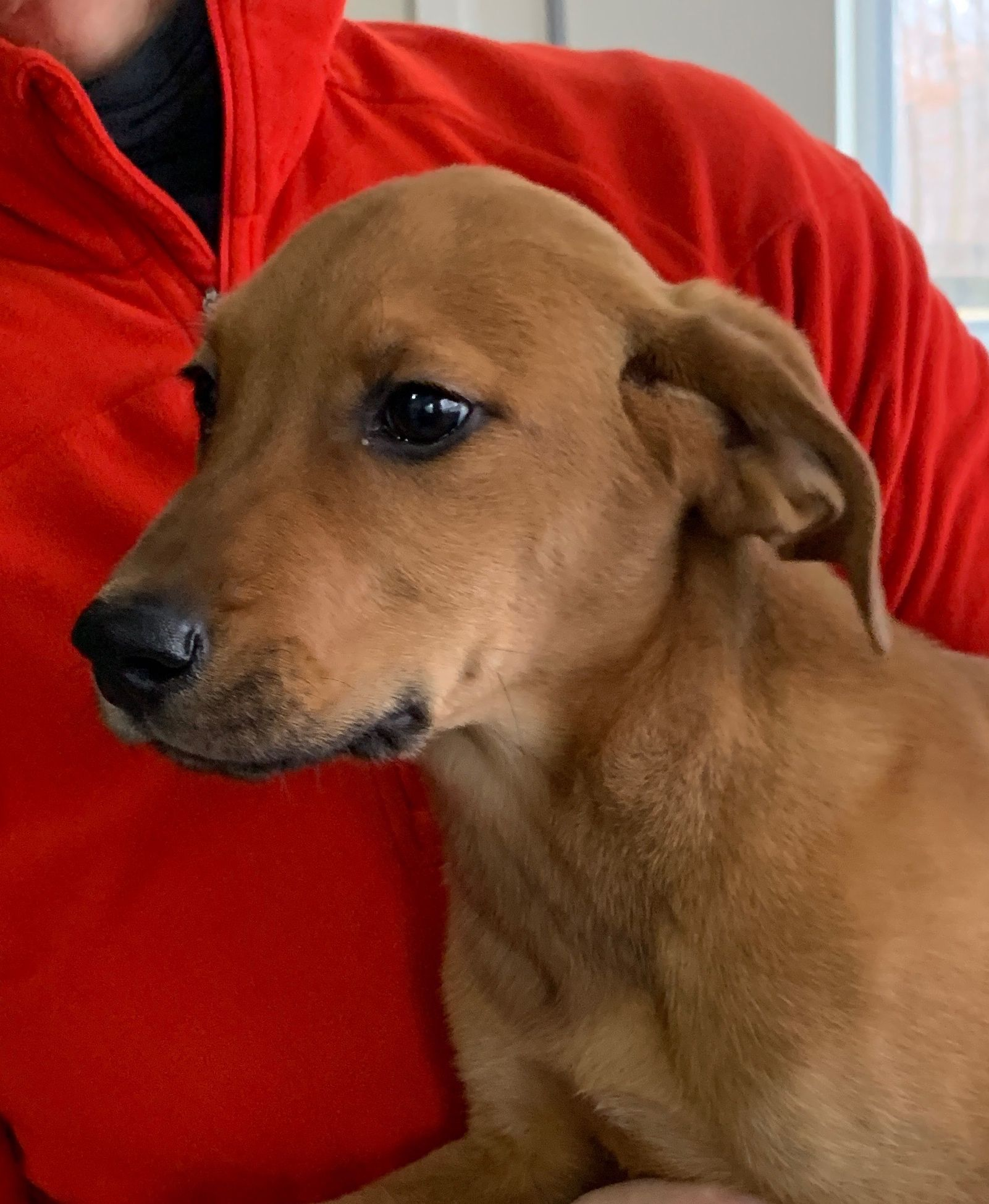 Adopt Sunday On Dogs Puppy Mix Small Puppies Rescue Dogs