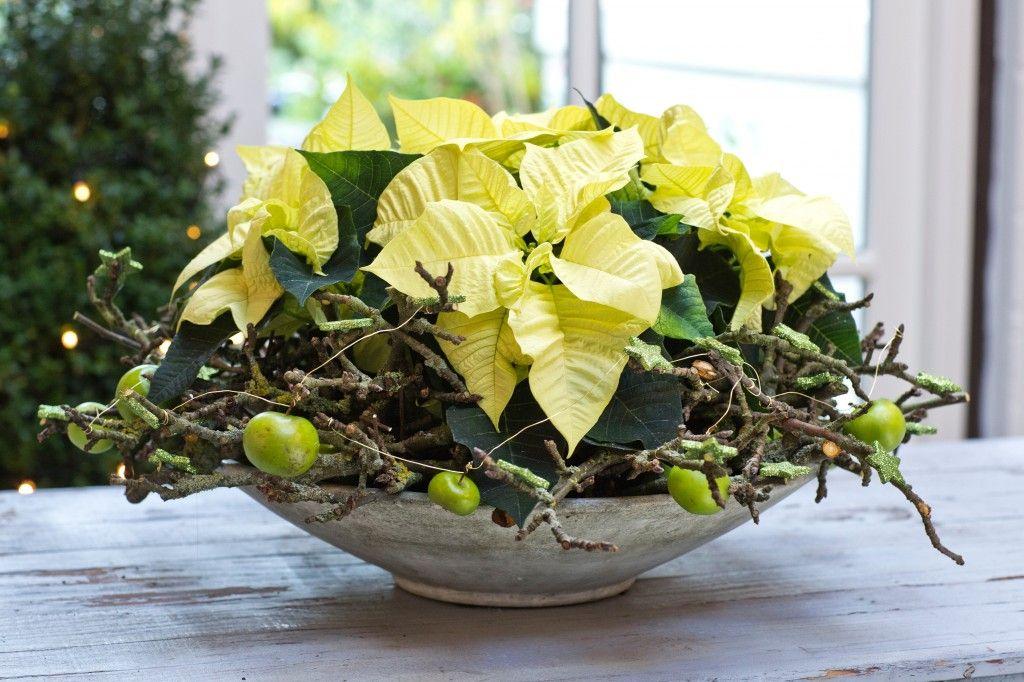 poinsettia bowl #christmas