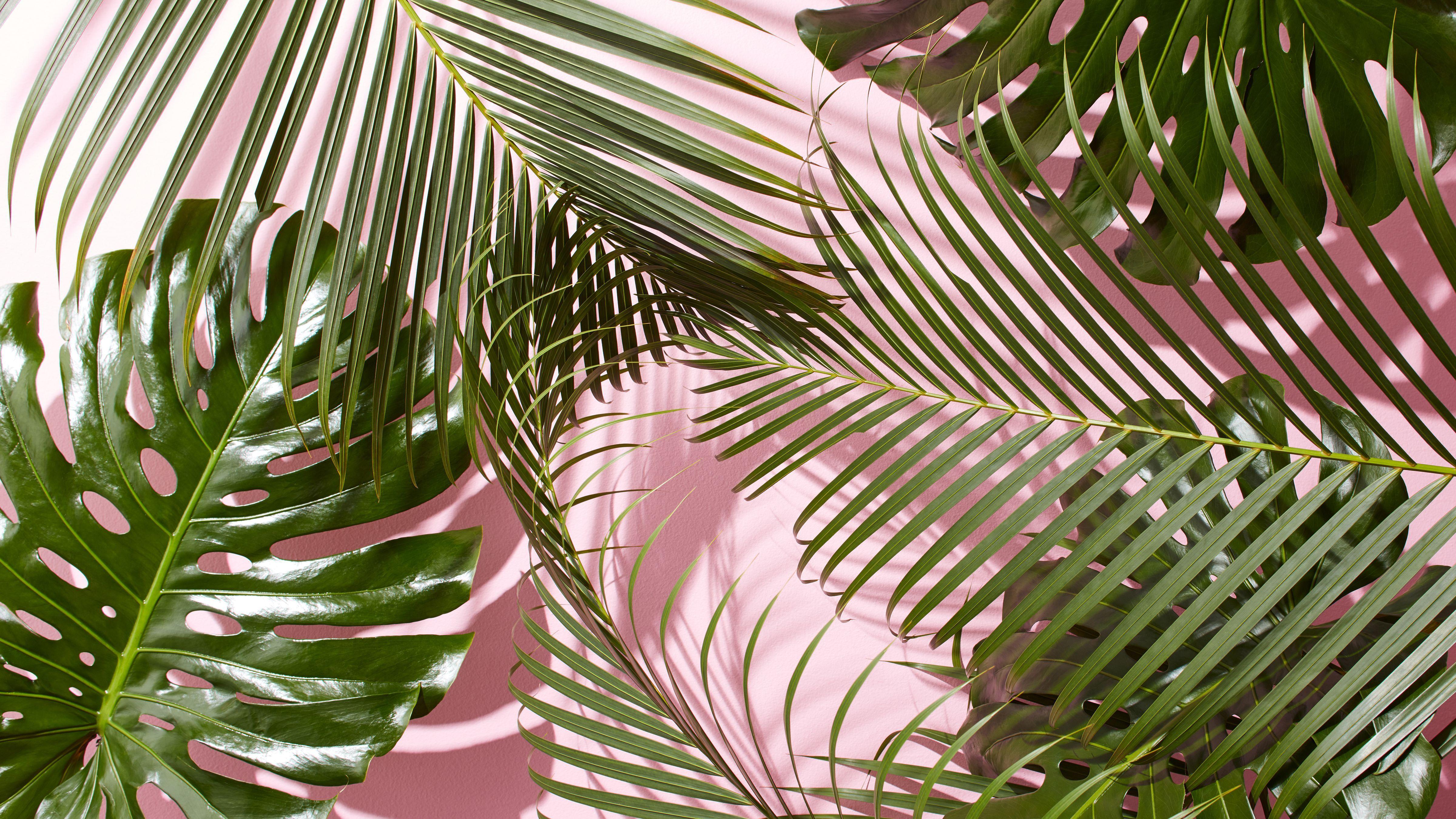 60 Tropical Leaves Desktop Wallpapers Download At Wallpaperbro Laptop Wallpaper Desktop Wallpapers Cute Desktop Wallpaper Plant Wallpaper