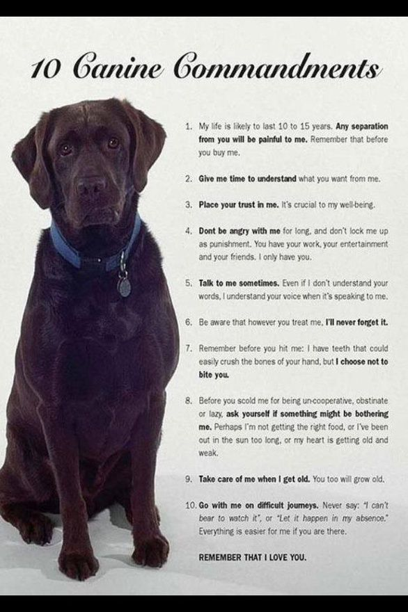 Canine 10 Commandments Baby Dogs Dog Love Dog Quotes