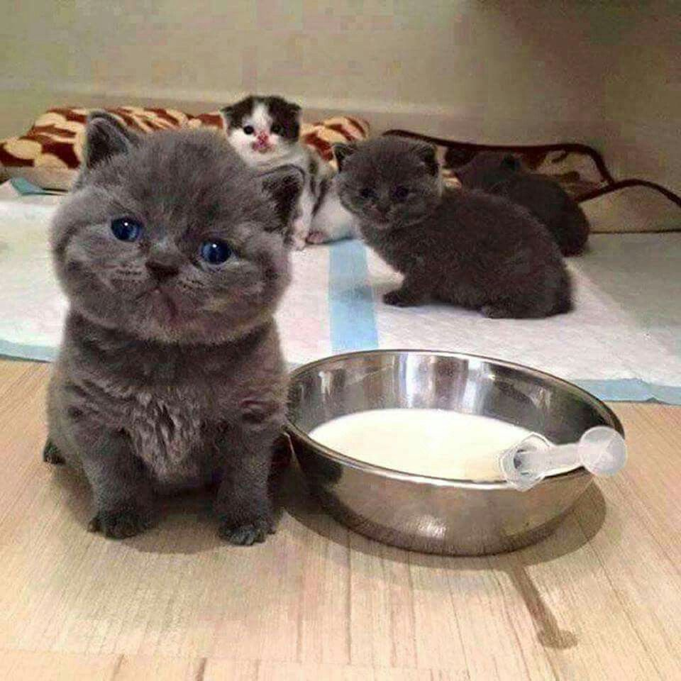Pin By Charmaine Smit On Fluffies Kittens Cutest Kittens Pretty Cats