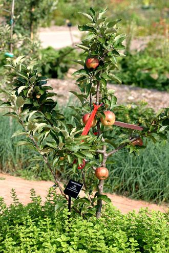 Companion Plants For Fruit Trees Including Apples Pears Peaches Cherries And Plums Great Article With Lots Fruit Garden Companion Gardening Edible Garden