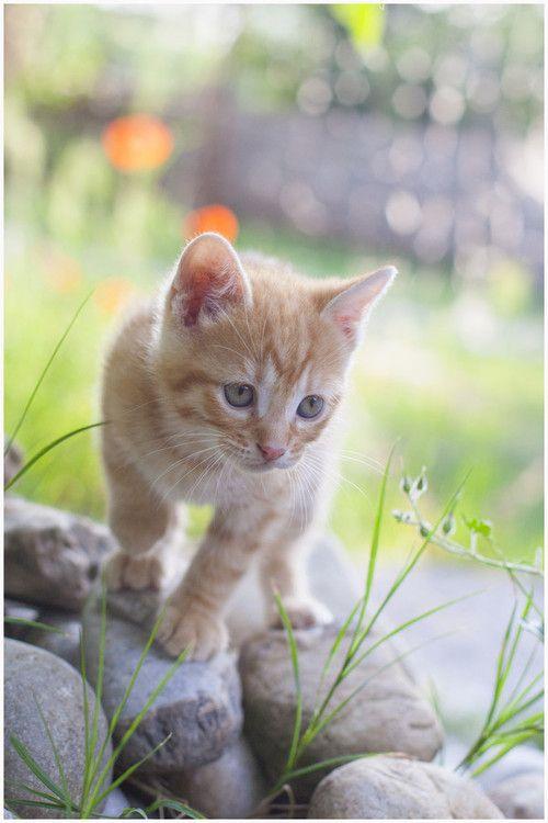 .cute kitten exploring