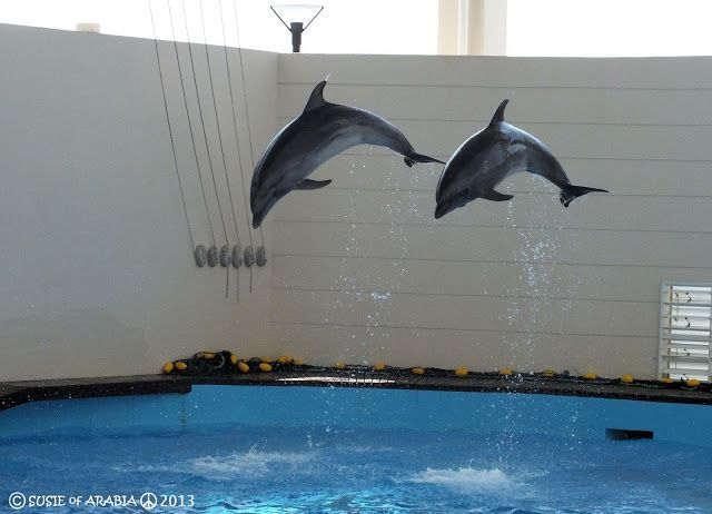 The Fakieh Aquarium Of Jeddah By Www Thesignaturehotels Com Jeddah Aquarium Animals