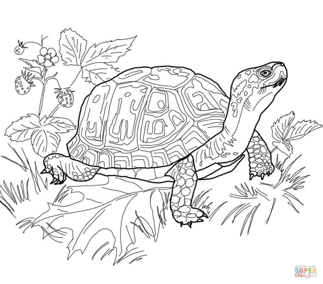 Box Turtle Pyrography Woodburning Line Drawing Pattern Malvorlagen Tiere Schildkrote Zeichnung Kostenlose Ausmalbilder