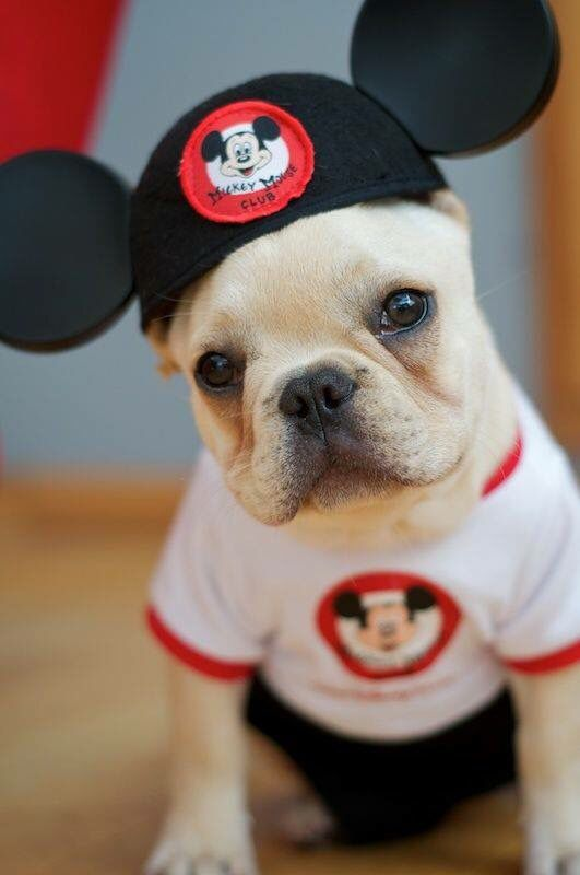 Puppy Dog Wearing A Mickey Mouse Ears T Shirt Cute Animals