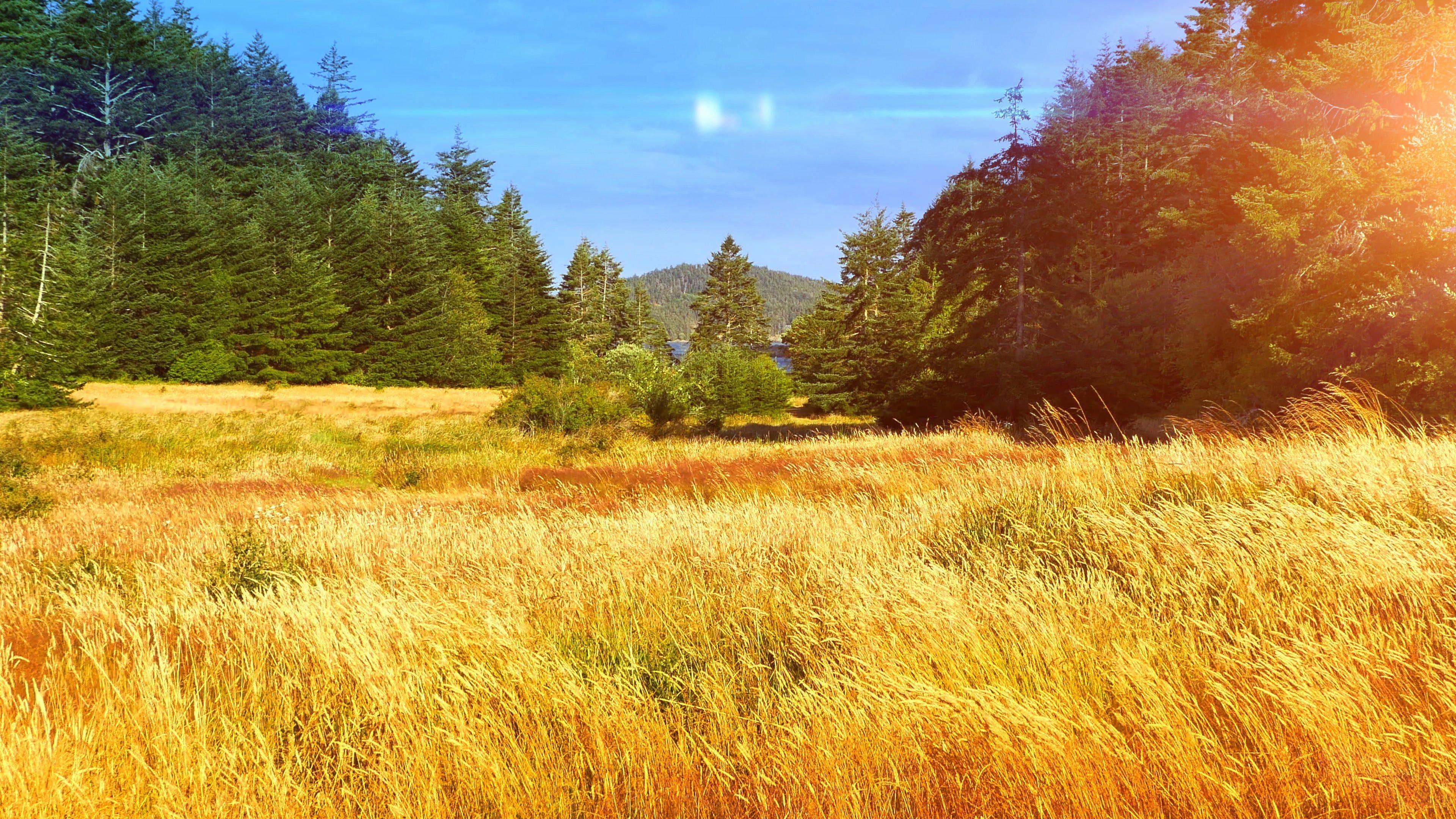 Sunset In Beautiful Park Nature Sunset Landscape Yellow Grass Field Sunlight Stock Footage Nature Landscape Park Sunse Sunset Landscape Landscape Grass Field