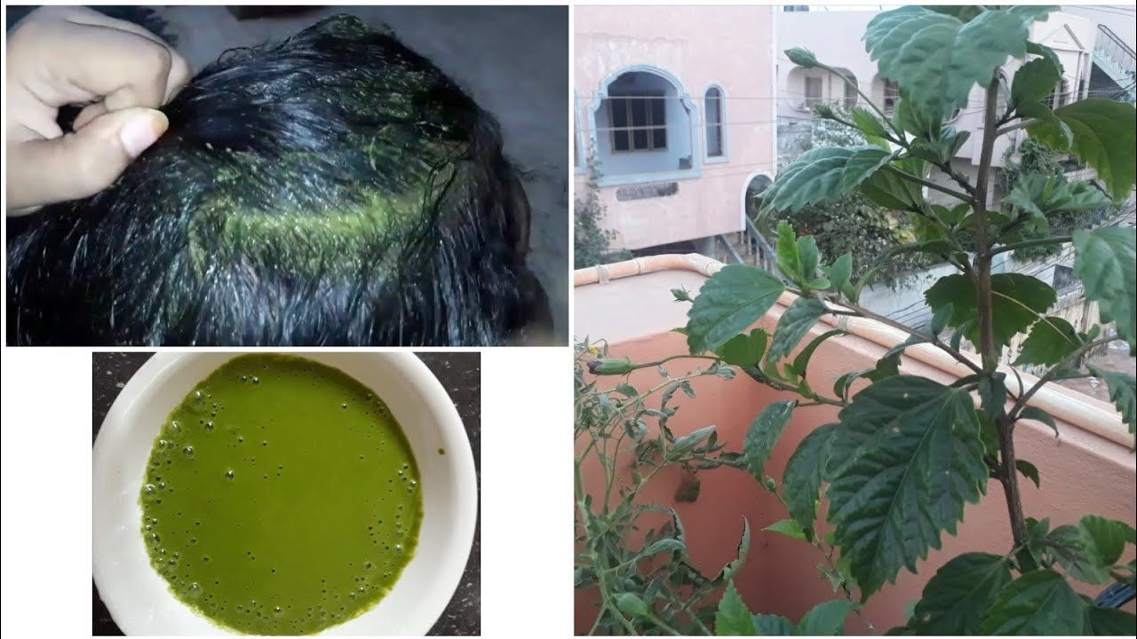 Hair Growth With Hibiscus Leaves And Stop Hair Loss Youtube Hibiscus Leaves Stop Hair Loss Hibiscus
