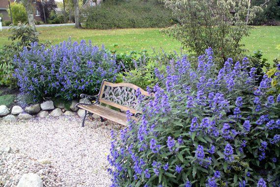 Gorgeous Drought Tolerant Plants Drought Resistant Plants Xeriscape Landscaping Plants