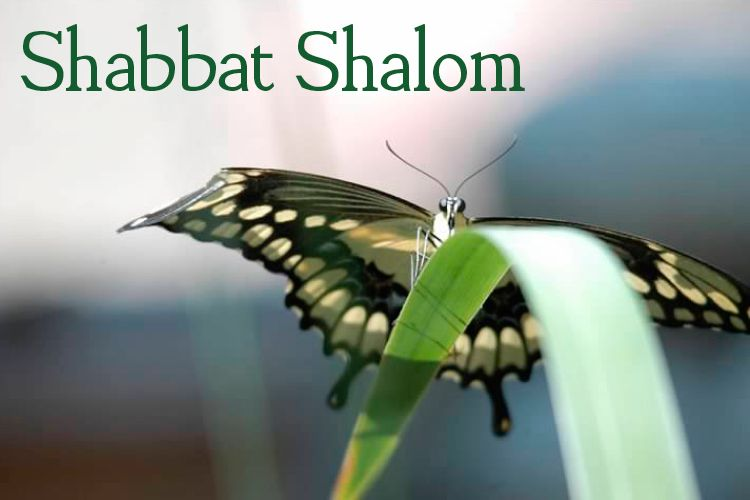 Hoping your Shabbat is a truly metamorphosing experience! Shabbat Shalom from Jewish United Fund of Chicago.