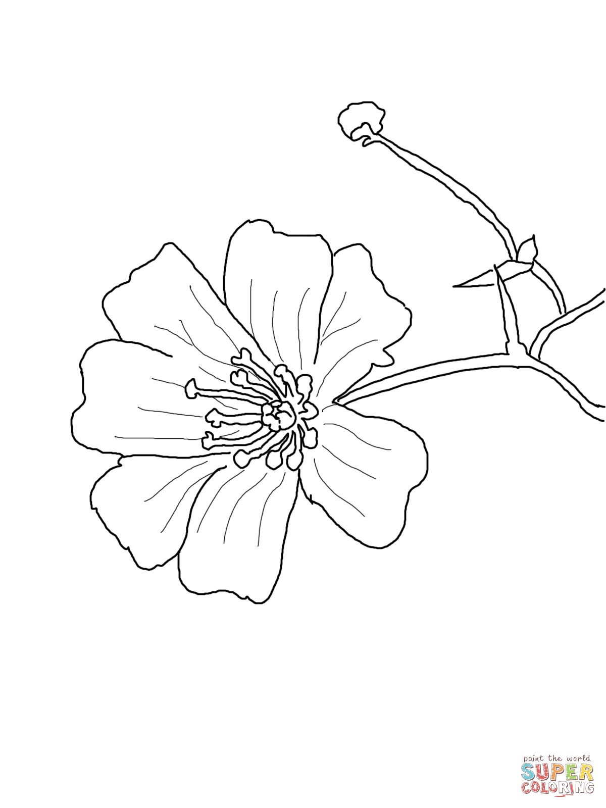 Baby\'s Breath Flower coloring page | SuperColoring.com | embroidery ...