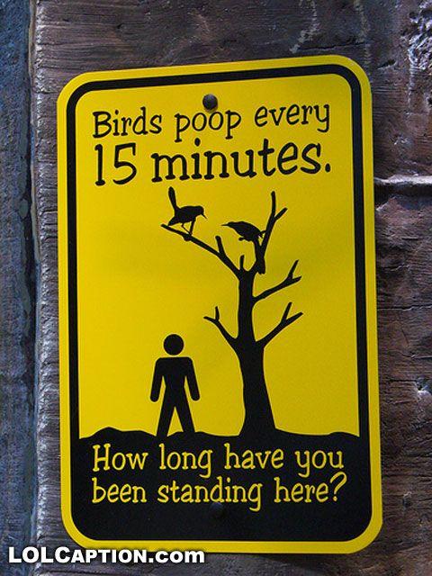 beware of the birds
