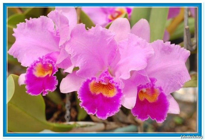 Purple Orchid Flower Meaning Flower Meanings Orchid Flower Purple Orchids
