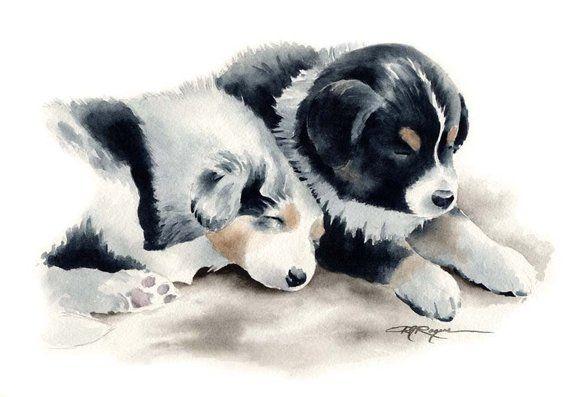AUSTRALIAN SHEPHERD PUPPIES Dog Art Print by Watercolor Artist D J Rogers