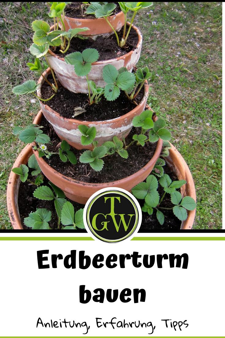 Erdbeerturm – Erdbeerpyramide bauen: eine Anleitung!