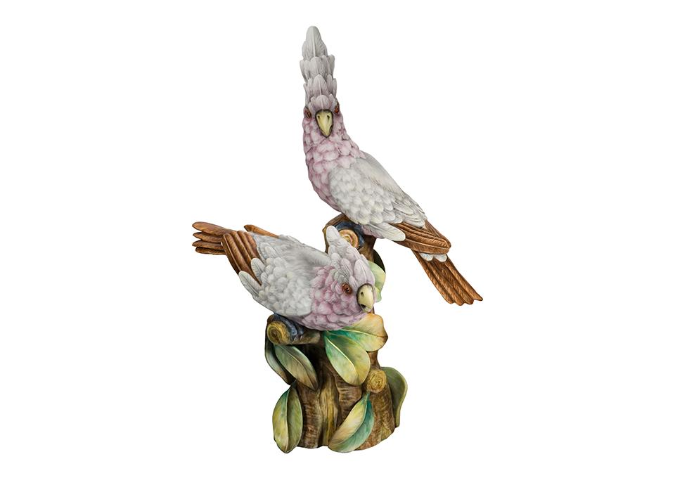 Pássaros - Cockatoo Group