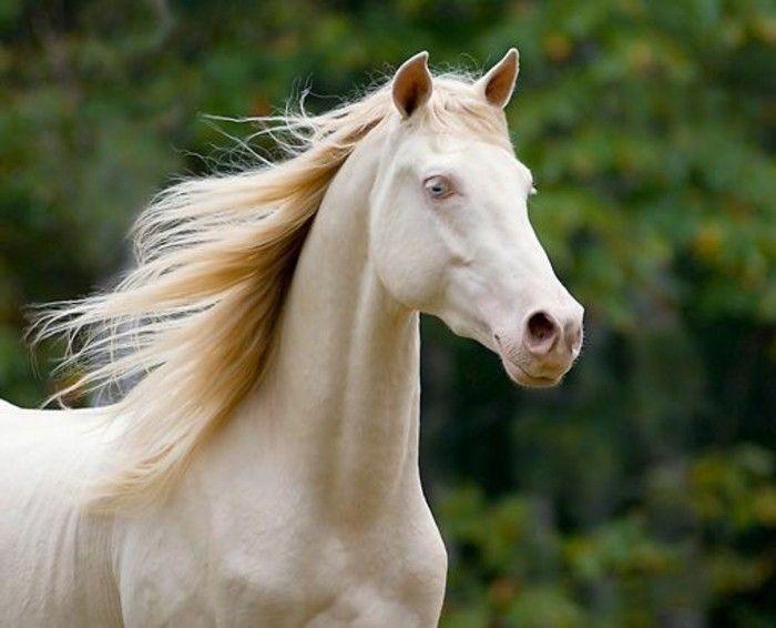 mehr als 70 super sch ne pferde bilder pferde horses pinterest wei e pferde pferd bilder. Black Bedroom Furniture Sets. Home Design Ideas
