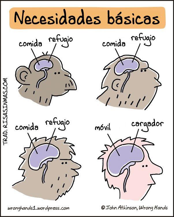 La Evolucion De Las Necesidades Basicas Social Media Humor Humor Funny Emails