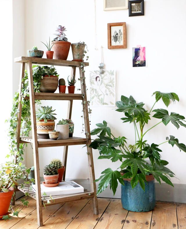 How to Create your very own Green Oasis