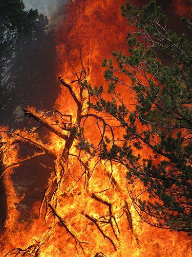 El fuego lo consumió todo y ni los poderes de los Dioses pudieron apagarlo.