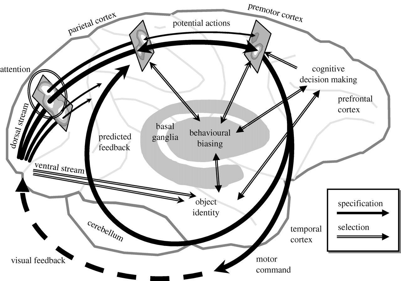 Saccadic Eye Movements Tracking Pattern