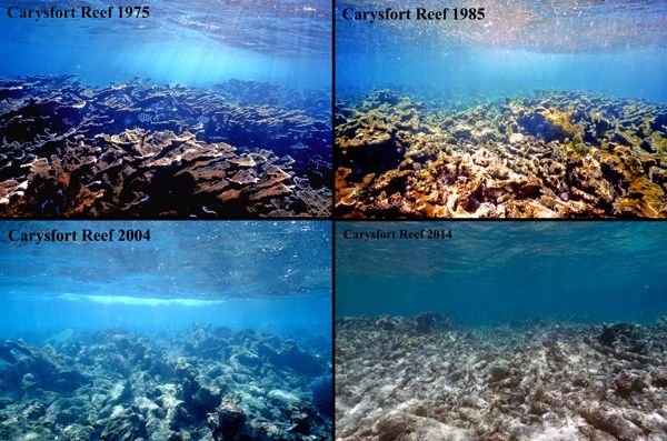 OMG I Thought You Were Dead! | Coral reef, Restoration ...