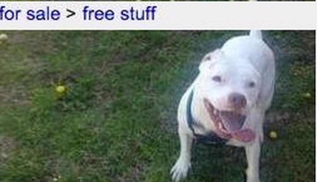 Why Giving Pets Away On Craigslist Is A Terrible Idea Pets Animals And Pets Animals